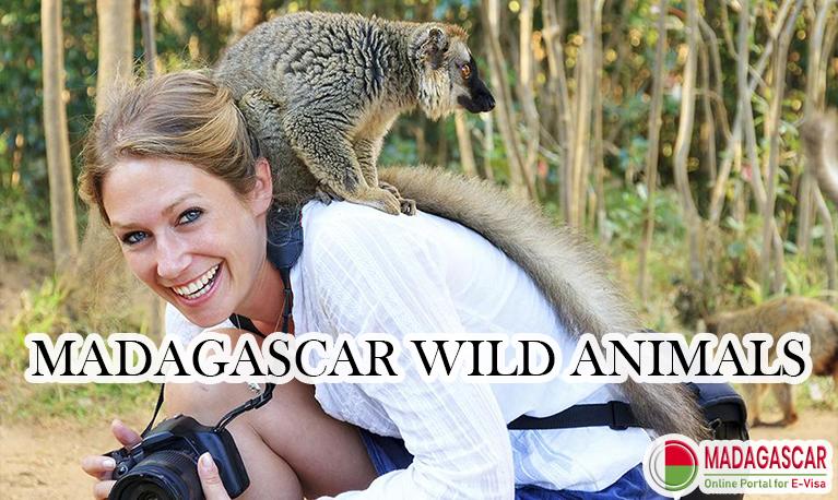 Madagascar wild animals